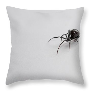 Southern Black Widow Spider Throw Pillow