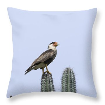 Southern Crested-caracara Polyborus Plancus Throw Pillow by David Millenheft
