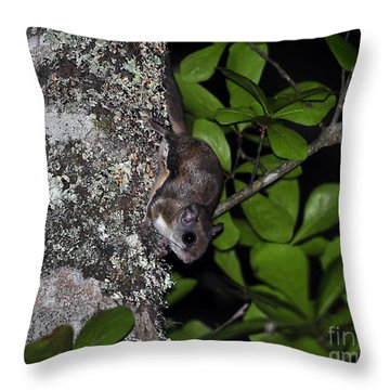 Southern Flying Squirrel Throw Pillow by Al Powell Photography USA