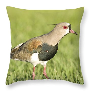Southern Lapwing Throw Pillow