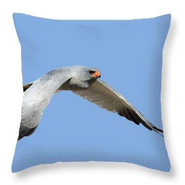 Southern Pale Chanting Goshawk In Flight Throw Pillow