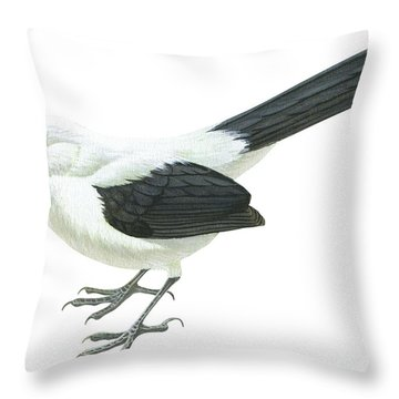 Southern Pied Babbler  Throw Pillow by Anonymous