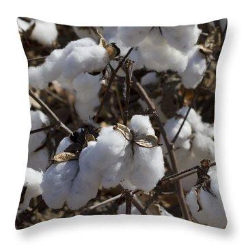 Southern Plantation Cotton Throw Pillow by Kathy Clark