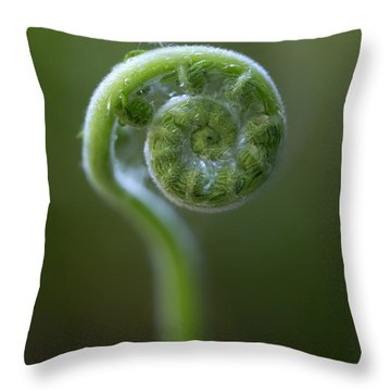 Southern Shield Fern Throw Pillow