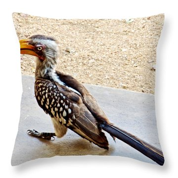 Southern Yellow-billed Hornbill In Kruger National Park-south Africa Throw Pillow