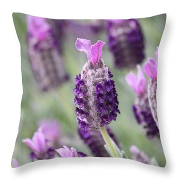 Spanish Breeze Throw Pillow