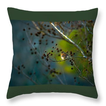 Sparrow In The Warm Light Throw Pillow by Shelby  Young
