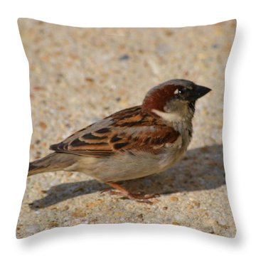 Throw Pillow featuring the photograph Sparrow by Mary Zeman