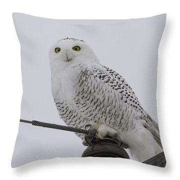 Special Owl Throw Pillow