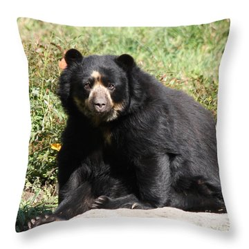 Speckled Bear Throw Pillow by John Telfer