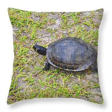 Speedy Slider Throw Pillow by Al Powell Photography USA