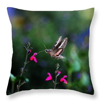 Sphinx Moth And Summer Flowers Throw Pillow by Karen Slagle