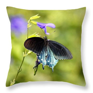Spicebush Swallowtail Butterfly In Pastel Throw Pillow by Suzanne Gaff