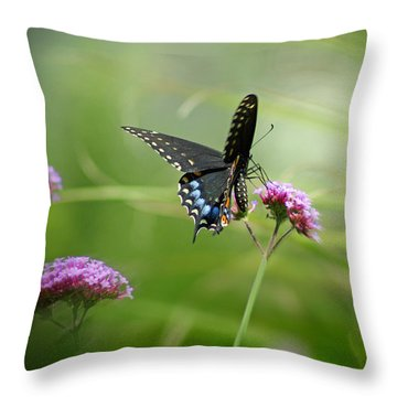 Spicebush Swallowtail Butterfly Throw Pillow
