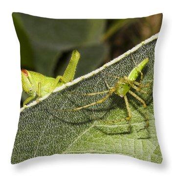 Spider-grasshopper Standoff Throw Pillow
