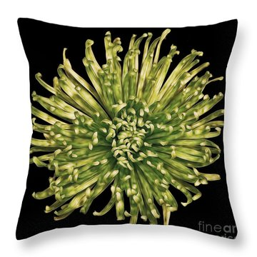 Throw Pillow featuring the photograph Spider Mum by Jerry Fornarotto