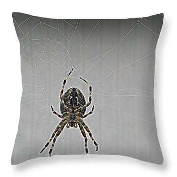 Throw Pillow featuring the photograph Spider On The Flip Side by Suzy Piatt