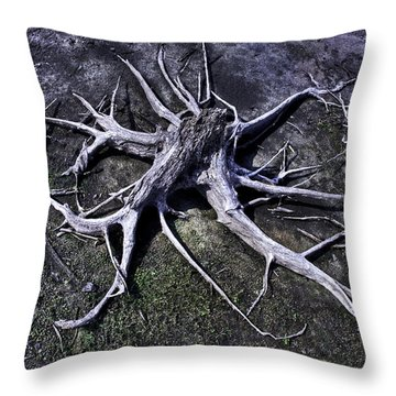Throw Pillow featuring the photograph Spider Roots At Manasquan Reservoir by Gary Slawsky