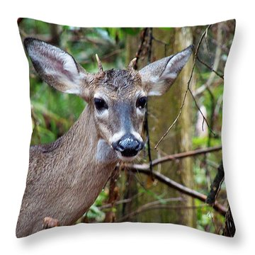 Spike Buck Whitetail Portrait Throw Pillow