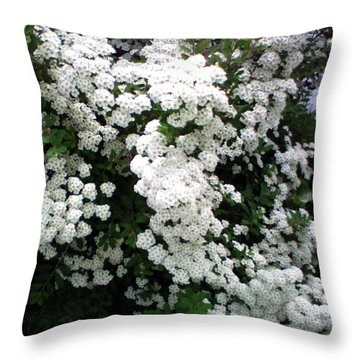 Throw Pillow featuring the photograph Spirea Bridal Veil by Barbara Griffin