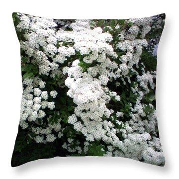 Spirea Bridal Veil Throw Pillow by Barbara Griffin