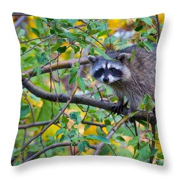 Spokane Raccoon Throw Pillow