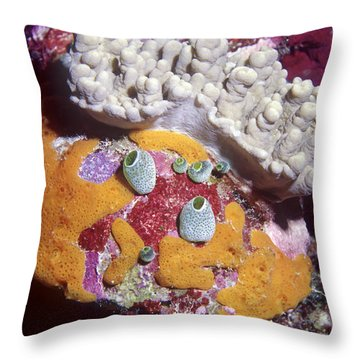 Sponge Head Throw Pillow