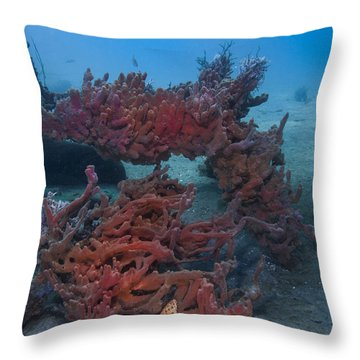 Sponges And A Star Throw Pillow
