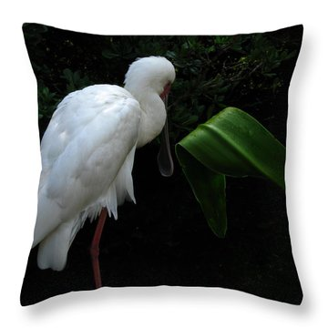 Spoonbill Morning Throw Pillow by Greg Patzer