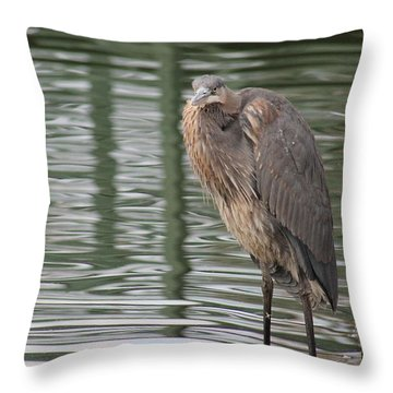 Spotted By A Great Blue Heron Throw Pillow by Robert Banach