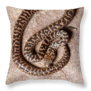 Spotted Python Antaresia Maculosa Top Throw Pillow