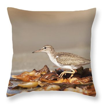 Throw Pillow featuring the photograph Spotted Sandpiper At The Beach by Ruth Jolly