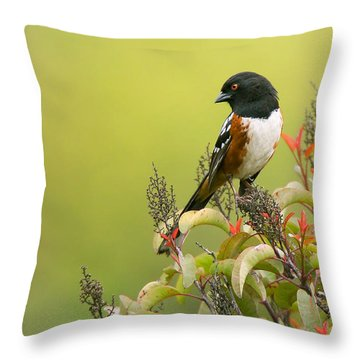Spotted Towhee Throw Pillow by Ram Vasudev