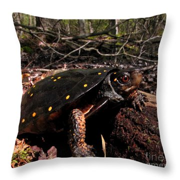 Spotted Turtle Throw Pillow