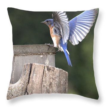 Throw Pillow featuring the photograph Spread Your Wings by John Crothers