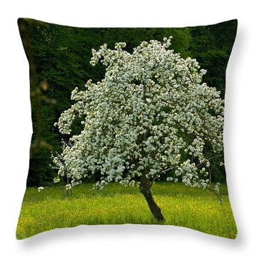 Spring - Blooming Apple Tree And Green Meadow Throw Pillow by Matthias Hauser
