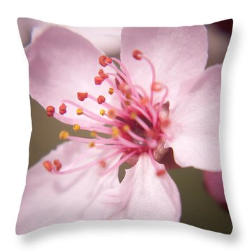 Spring Blooms 6697 Throw Pillow by Timothy Bischoff