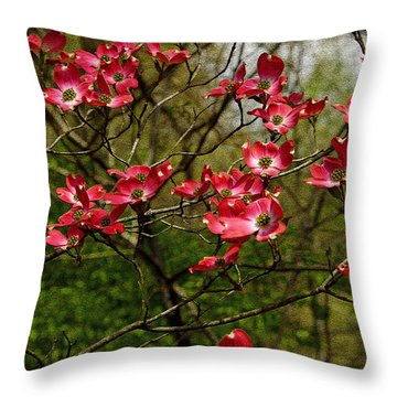 Throw Pillow featuring the photograph Pink Spring Dogwood Blooms  by James C Thomas