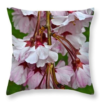 Spring Blossom Throw Pillow by Frozen in Time Fine Art Photography