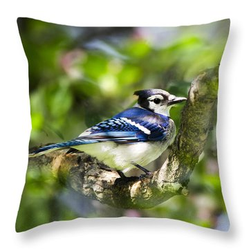 Spring Blue Jay Throw Pillow by Christina Rollo