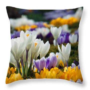 Spring Crocus Throw Pillow by Dianne Cowen