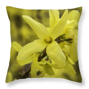 Spring Comes Sofly Throw Pillow by Arlene Carmel