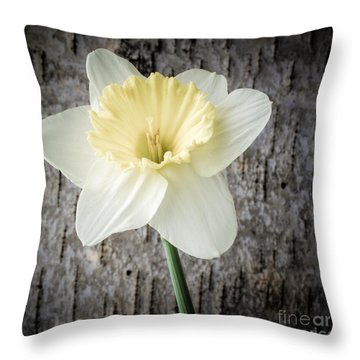 Spring Daffodil Square Throw Pillow by Edward Fielding
