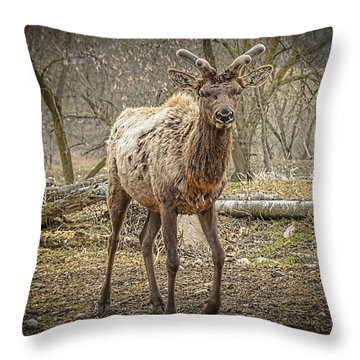 Spring Elk Throw Pillow by LeeAnn McLaneGoetz McLaneGoetzStudioLLCcom