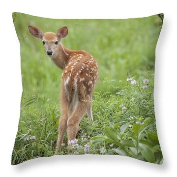 Spring Fawn Throw Pillow by Jeannette Hunt