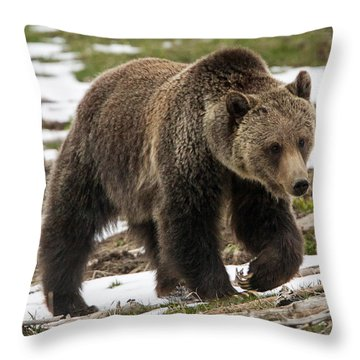 Throw Pillow featuring the photograph Spring Grizzly Bear by Jack Bell