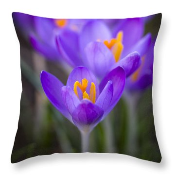 Spring Has Sprung Throw Pillow by Clare Bambers