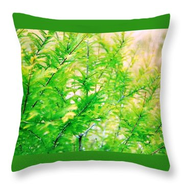 Spring Cypress Beauty Throw Pillow