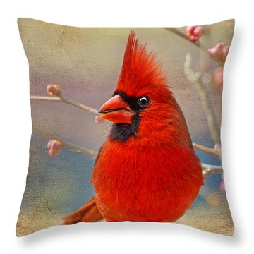Spring Male Norther Cardinal Throw Pillow by Debbie Portwood
