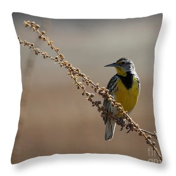 Spring Meadowlark Throw Pillow by Marty Fancy